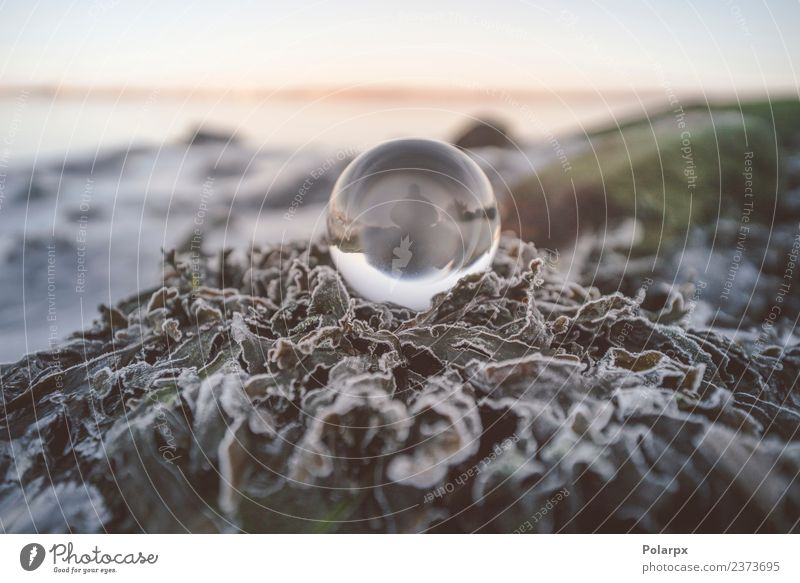 Crystal ball in the nature with a silhouette of a person Human being Nature Beautiful Green White Leaf Winter Snow Glittering Vantage point Future Wellness