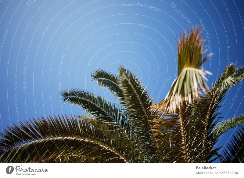#A# Palm Island Environment Nature Esthetic Palm tree Palm frond Palm beach Palm House Vacation & Travel Summer vacation Vacation mood Colour photo