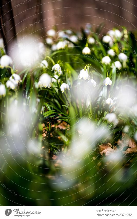 March Cup Flowering in Lower Saxony Vacation & Travel Tourism Trip Adventure Far-off places Freedom Mountain Hiking Environment Nature Landscape Plant Spring