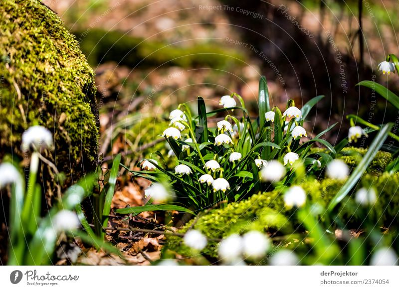 March Cup Flowering in Lower Saxony Vacation & Travel Tourism Trip Adventure Freedom Mountain Hiking Environment Nature Landscape Plant Spring Tree