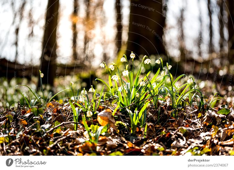 March cup blossom in back light Vacation & Travel Tourism Trip Adventure Far-off places Mountain Hiking Environment Nature Landscape Plant Spring