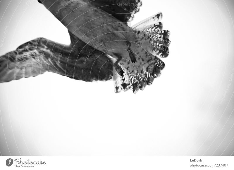 Animal Clouds Loneliness Dark Cold Freedom Gray Sadness Air Bird Weather Wind Flying Wild animal Esthetic