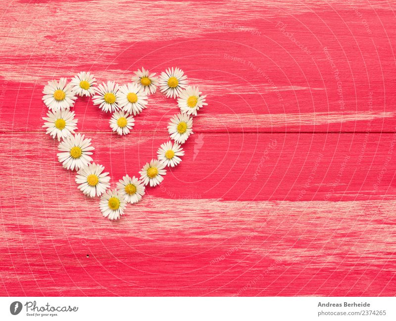 Heart of daisy on red wood Style Design Summer Valentine's Day Mother's Day Birthday Nature Plant Flower Blossom Love Yellow Pink heart white