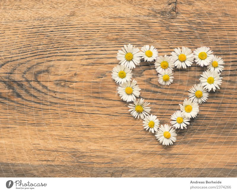 Heart of daisies Style Summer Event Nature Plant Flower Love Jump Yellow abstract Living thing Background picture beautiful bloom blossom card celebration color