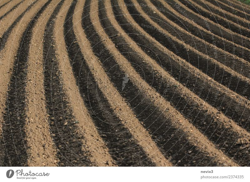 furrows of a freshly ploughed field Environment Nature Landscape Elements Earth Spring Field Brown Spring fever Calm Agriculture Arable land Plowed