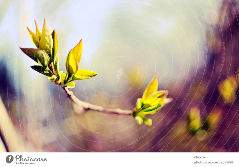 P f l a n z e. Nature Spring Beautiful weather Plant Colour photo Exterior shot Deserted Twigs and branches Delicate Graceful Blossom Growth Copy Space top