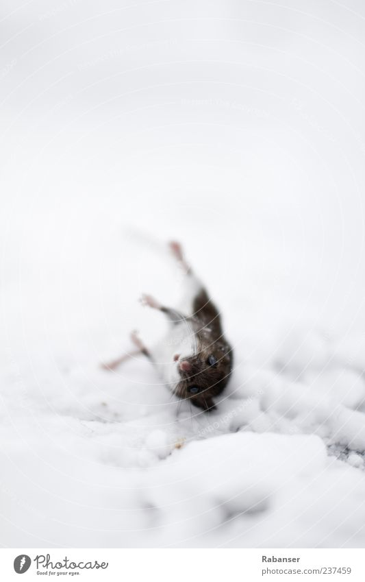 Nature Animal Death Eyes Snow Sadness Moody Ice Climate Wild Free Frost Grief Transience Pelt Animal face