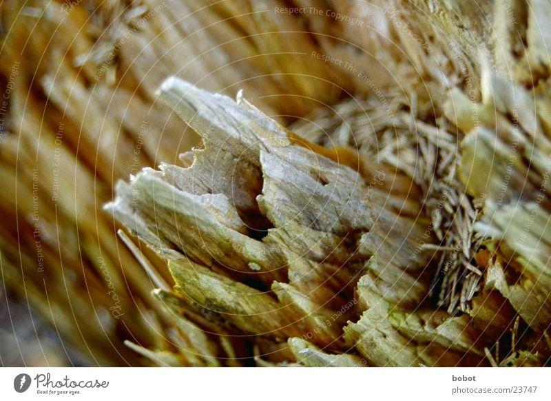 Tree Wood Brown Corner Level Deep To break (something) Sharp-edged Splinter Fir needle Brittle Shiver