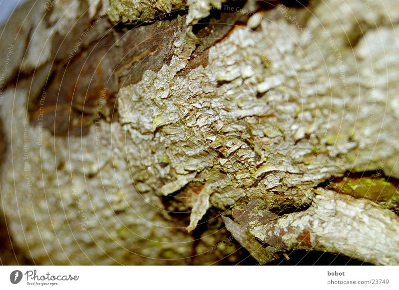 tree skin Tree bark Wood Splinter Rough Crack & Rip & Tear Plant Brown Green whoiscocoon