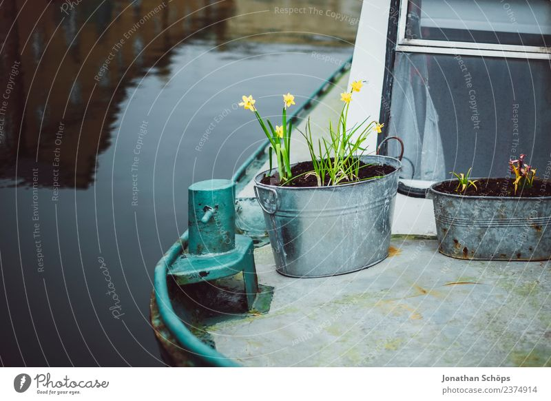Water Flower Joy Lifestyle Yellow Spring Love Happy Gray Watercraft Contentment Metal Joie de vivre (Vitality) Blossoming Hope Harbour