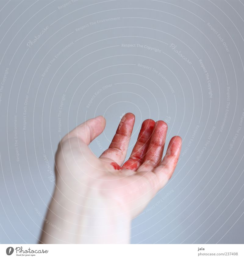 bloody fingers Hand Fingers Blood Fluid Red Pain Wound Indicate Colour photo Interior shot Copy Space top Neutral Background Day 1 Cut Hemorrhage Accident