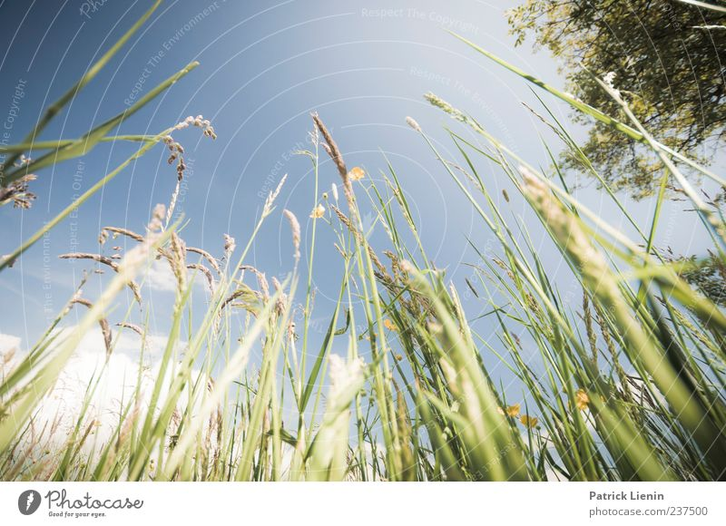Sky Green Beautiful Leaf Calm Meadow Grass Blade of grass Blue sky Sky blue Skyward Elements