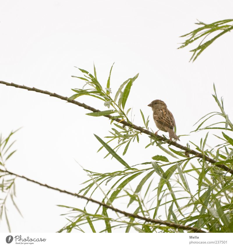 Sky Nature Tree Plant Leaf Animal Environment Small Bird Brown Sit Natural Cute Branch Twig Foliage plant