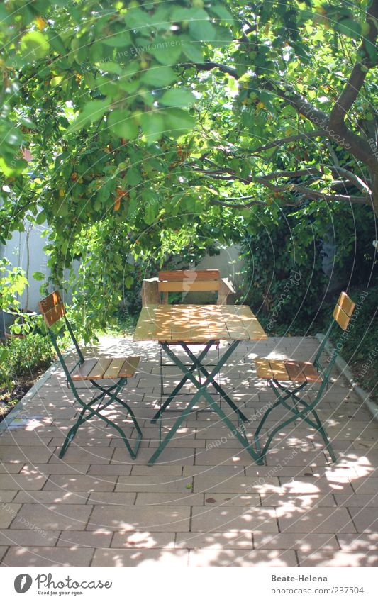Under the apple tree Style Garden Spring Beautiful weather Tree Bright Brown Green Shadow Garden table Garden chair Weather protection Seating Colour photo