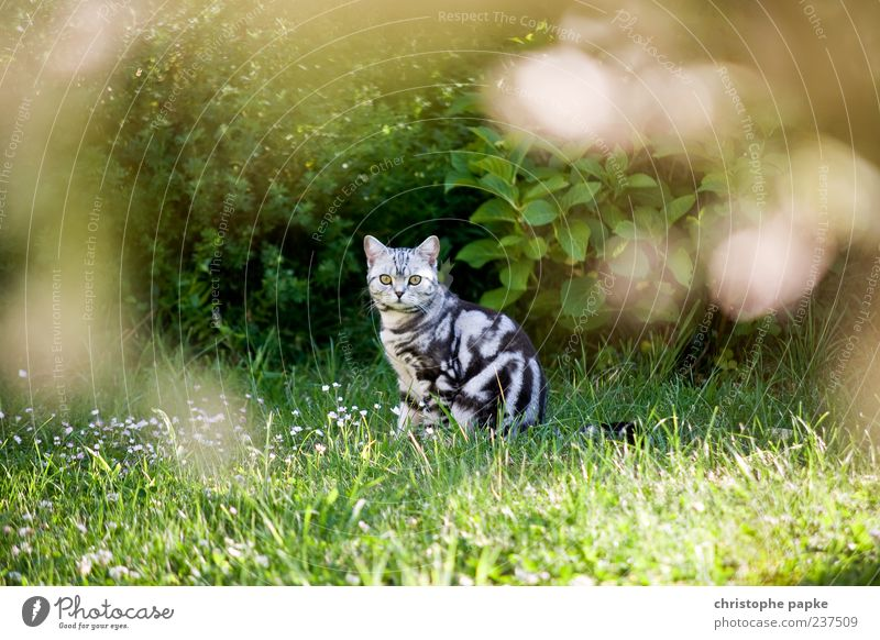 Cat Summer Animal Grass Garden Sit Cute Observe Curiosity Watchfulness Interest Timidity Love of animals Free-living Prowl