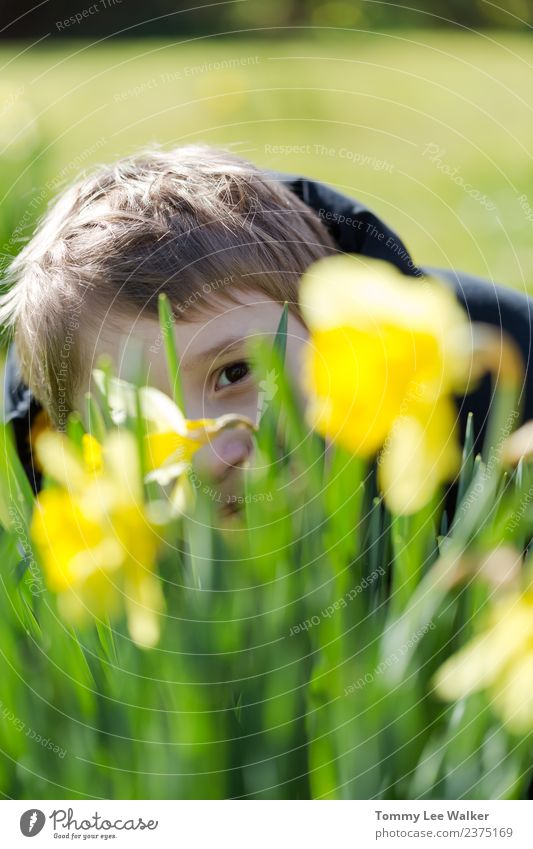 Young boy hides smiling behind yellow daffodil / narcissus. Child Green Sun Joy Yellow Love Meadow Playing Freedom Leisure and hobbies Infancy Blonde Action