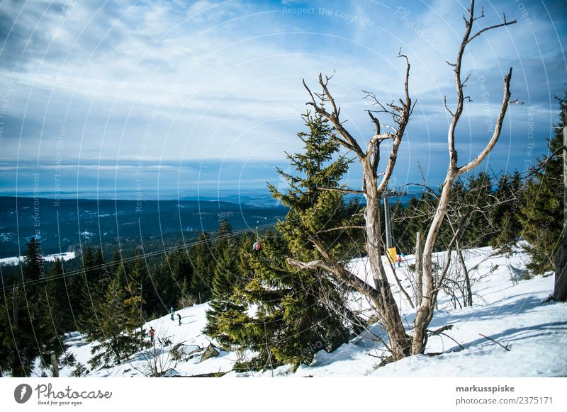 Nature Vacation & Travel Landscape Tree Winter Far-off places Mountain Snow Sports Tourism Freedom Trip Hiking Adventure To enjoy Bushes