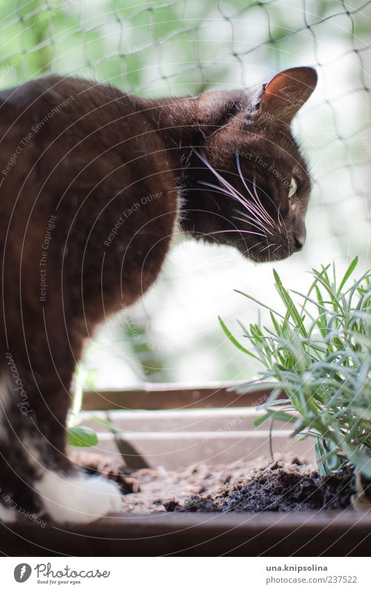 Cat Nature Green White Plant Animal Black Garden Authentic Fresh Observe Herbs and spices Balcony Delicious Discover Pet