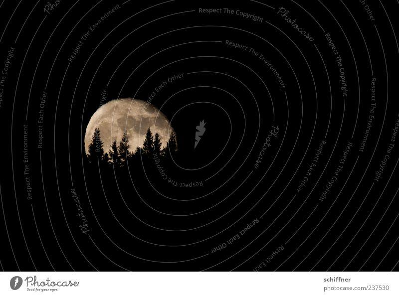 Auuuuuuuuuuu Landscape Night sky Moon Full  moon Tree Forest Hill Black Moonlight Moonrise Fir tree Twilight Werewolf Fear Dread Night mood Exterior shot