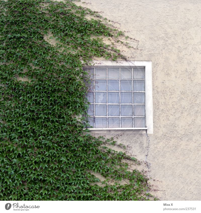 Green Plant Window Wall (building) Wall (barrier) Facade Growth Bushes Ivy Tendril Glass block