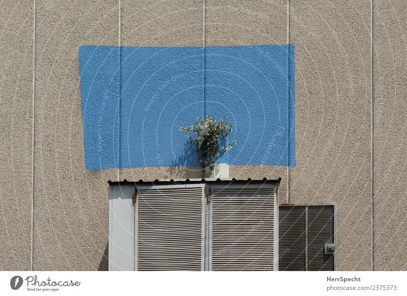 Plant Blue Town Flower House (Residential Structure) Wall (building) Blossom Building Wall (barrier) Garden Exceptional Gray Gloomy Crazy Manmade structures