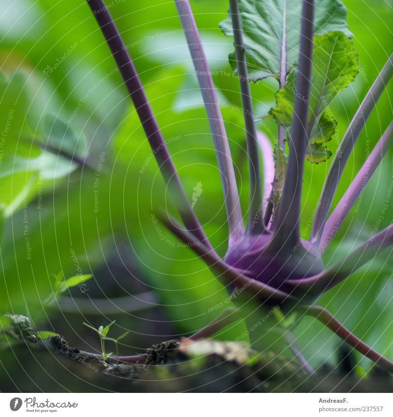 Nature Green Nutrition Food Fresh Healthy Eating Violet Vegetable Organic produce Section of image Partially visible Vegetarian diet Macro (Extreme close-up)