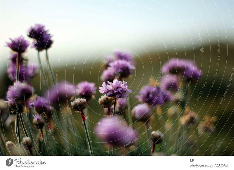Pembrokeshire Purple Nature Beautiful Flower Plant Summer Life Emotions Blossom Environment Fresh Purity