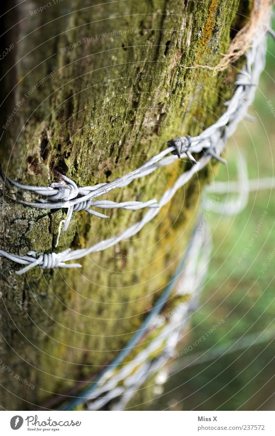 barbed wire Garden Old Thorny Decline Barbed wire Tree trunk Wood Fence post Metalware Brittle Colour photo Subdued colour Exterior shot Close-up