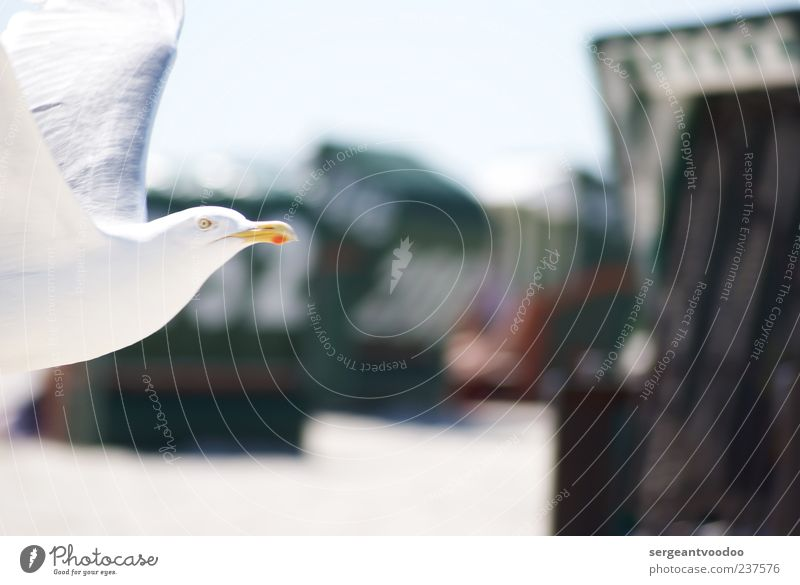 Nature Water White Vacation & Travel Ocean Summer Beach Animal Environment Movement Coast Freedom Bird Power Flying Wild animal