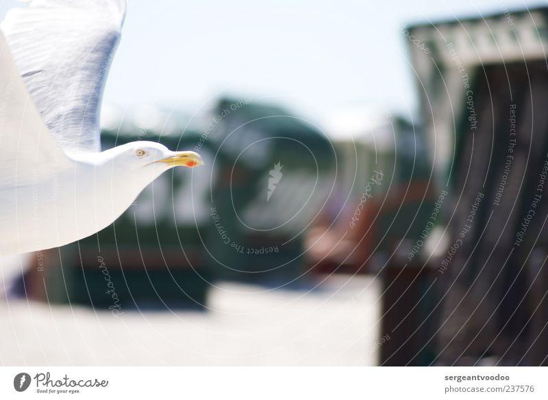Nature Water White Vacation & Travel Ocean Summer Beach Animal Environment Movement Coast Freedom Bird Power Flying Wild animal