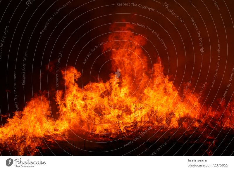 Forest fire Work and employment Agriculture Forestry Environment Nature Landscape Fire Climate change Wind Tree Hot Natural Wild Orange Red Black Fear Horror