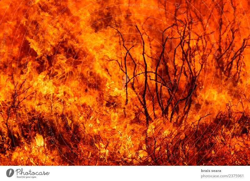 Forest fire Nature Plant Landscape Tree Environment Natural Work and employment Wild Wind Dangerous Fire Agriculture Education Spain Hot