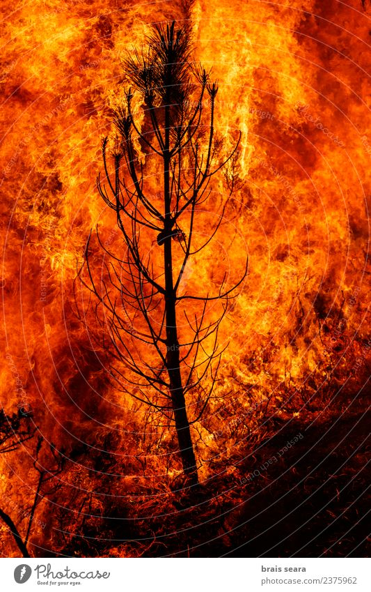 Forest fire Agriculture Forestry Environment Nature Landscape Fire Climate change Wind Tree Hot Natural Wild Orange Red Black Sadness Fear Horror Dangerous