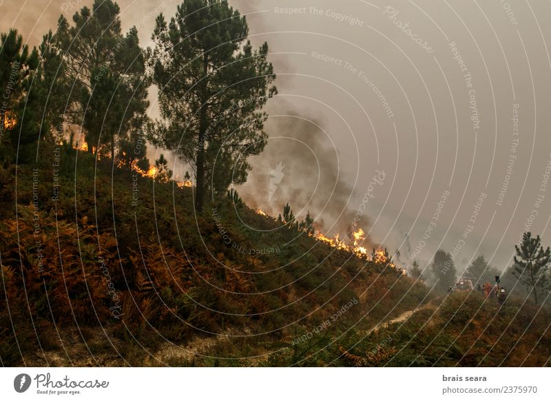 Forest fire Agriculture Forestry Environment Nature Landscape Fire Climate change Wind Plant Tree Bushes Hot Natural Wild Green Sadness Fear Horror Dangerous