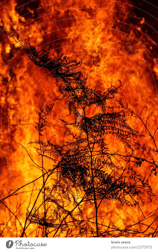 Forest fire Agriculture Forestry Environment Nature Landscape Fire Climate Climate change Bad weather Wind Tree Hot Natural Wild Orange Red Black Sadness Fear