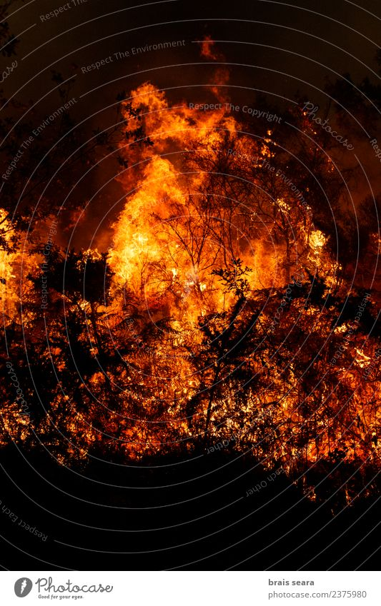 Forest fire Nature Landscape Tree Red Black Environment Sadness Natural Orange Wild Fear Wind Dangerous Fire Agriculture