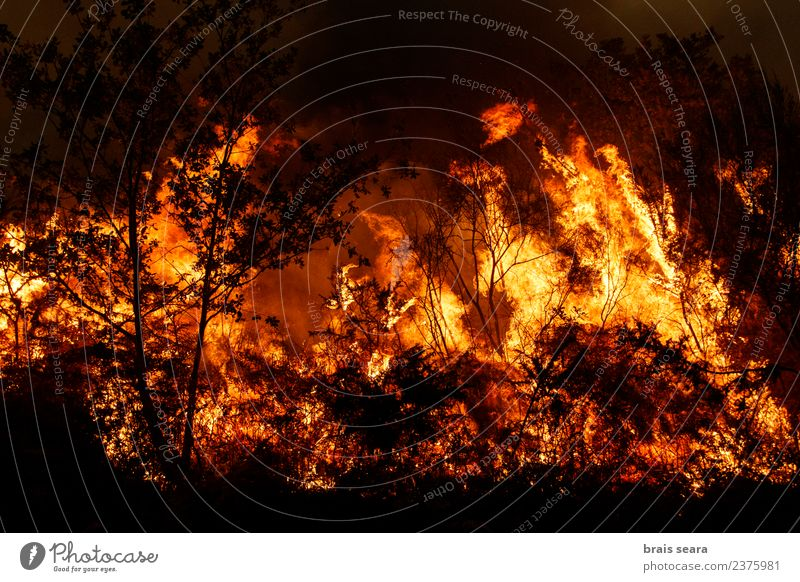 Forest fire Agriculture Forestry Environment Nature Landscape Fire Climate change Wind Plant Tree Bushes Hot Natural Wild Orange Red Black Sadness Fear Horror