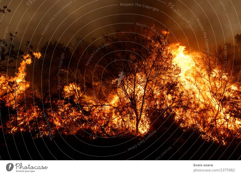 Forest fire Nature Plant Landscape Tree Red Black Environment Sadness Natural Orange Wild Fear Wind Dangerous Climate