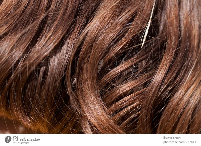 Feminine Hair and hairstyles Brown Curl Brunette Blade of grass Long-haired Red-haired Strand of hair Undulating Auburn