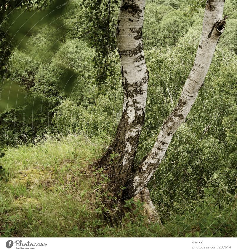 Nature White Tree Green Plant Leaf Black Forest Movement Gray Landscape Environment Air Weather Wind Growth