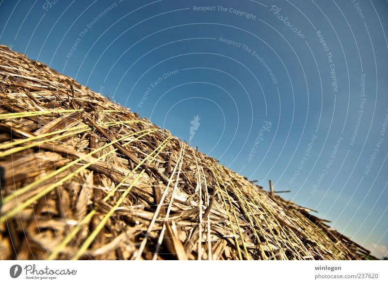 straw Sky Nature Plant Summer Environment Air Art Germany Horizon Work and employment Field Growth Good Idyll Village Agriculture