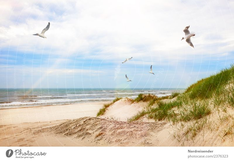 Seagulls over beach and dunes Vacation & Travel Tourism Summer Summer vacation Sun Beach Ocean Waves Landscape Elements Sand Water Clouds Beautiful weather