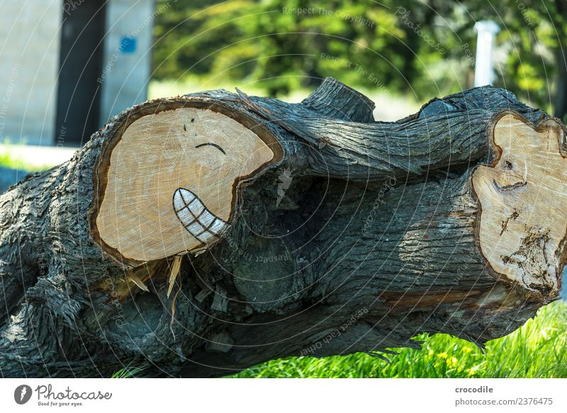 # 745 Urban art Wood Tree trunk Branch Smiley Face Laughter Grinning Art Drawing Funny Colour photo
