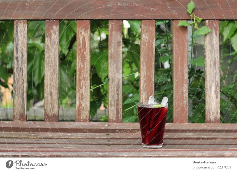 A toast to the 100! Beverage Cold drink Lemonade Glass Nature Beautiful weather Ivy Garden Wood To enjoy Drinking Good Brown Green Red Moody Joy Contentment