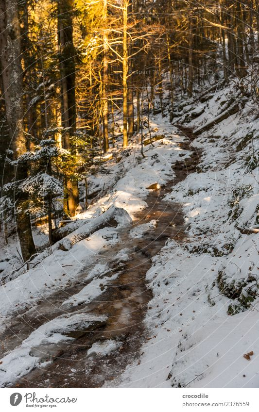 The way Hiking Fitness Environment Nature Landscape Winter Ice Frost Snow Hill Mountain Lanes & trails Calm Colour photo Exterior shot Deserted Evening