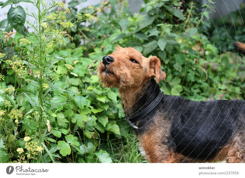 william winston Animal Pet Dog 1 Cute Brown Green Black Colour photo Exterior shot Day Puppydog eyes Dog's snout Deserted