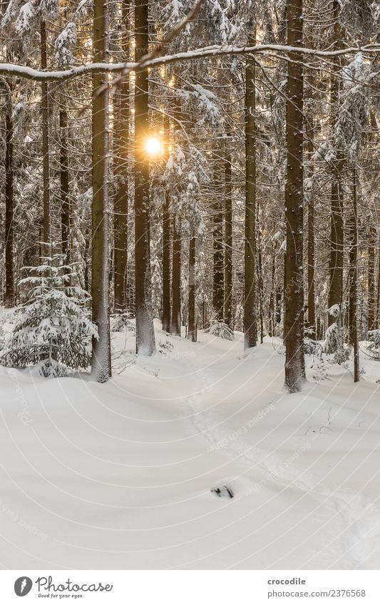 the way II Winter forest Snowscape Colour photo Spruce Forest Bavarian Forest Back-light Sun Sunset Cold Tracks Calm White Branch Brown Snow shoes Hiking