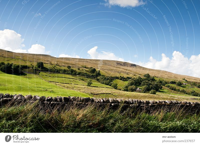Behind the Wall Nature Landscape Plant Earth Sky Clouds Horizon Autumn Beautiful weather Tree Grass Bushes Wild plant Meadow Field Hill Bright Blue Green