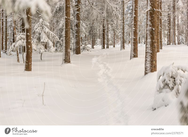 The Path III Winter forest Snowscape Colour photo Spruce Forest Bavarian Forest Cold Tracks Calm White Branch Brown Snow shoes Hiking Walking Deserted Peaceful
