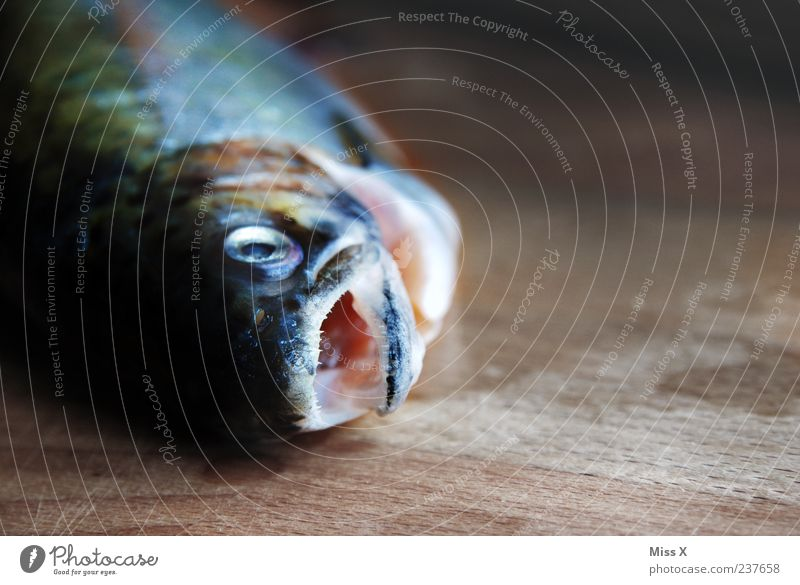 Fish in the morning Food Lie Fresh Wet Death Trout Raw Muzzle Colour photo Interior shot Close-up Deserted Copy Space right Light Shadow Shallow depth of field